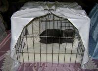 Kavez za mačke 9