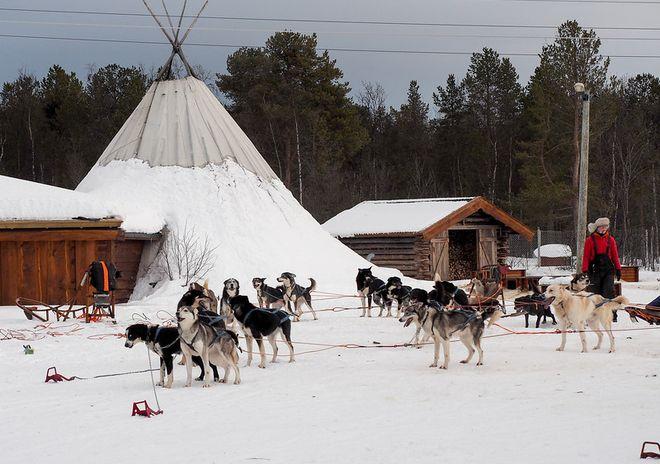 Катание на собачей упряжке в кемпинге Holmen Husky Lodge