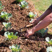 когато можете да засадите градина след Великден