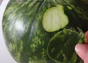 Rzeźbiarstwo warzyw i owoców 2