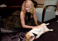 Кеша обожает собак и поддерживает акцию