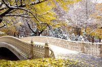 Сентрал Парк в Ню Йорк1