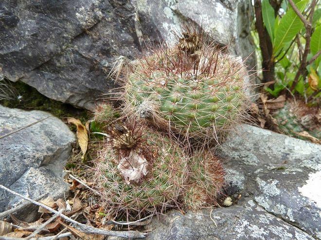 Растения на холме