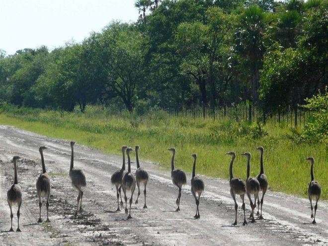 Представители фауны парка обороны Чако