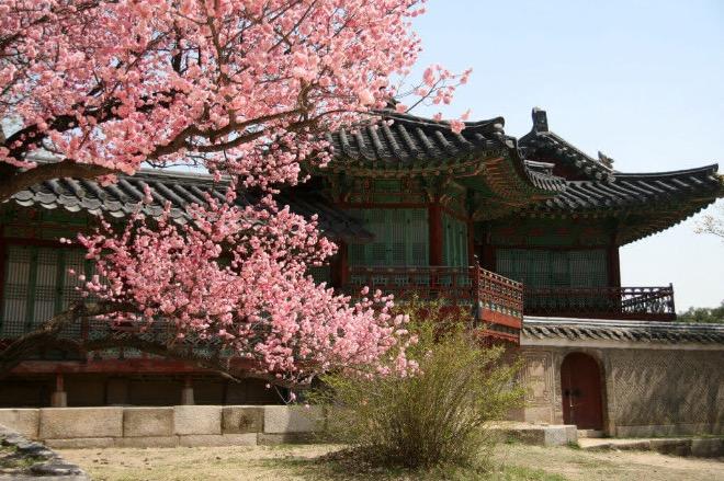 Чхандоккун весной