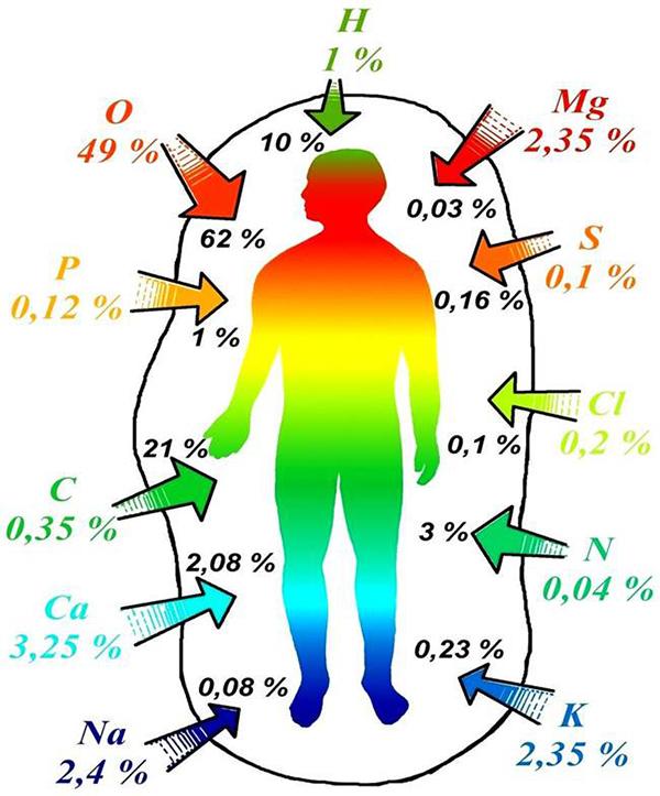 rola pierwiastków chemicznych w ludzkim ciele