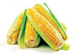 kukurydza podczas ciąży