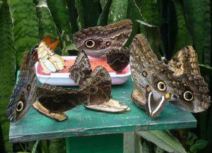 Ферма бабочек в Алахуэле
