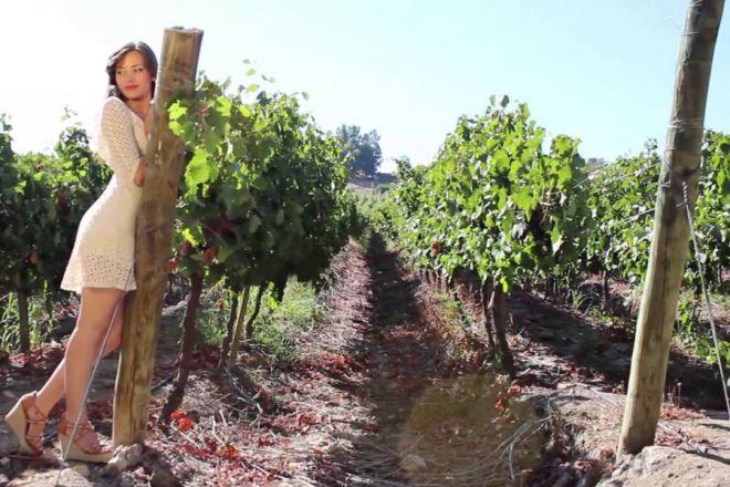 Виноградники вокруг Курико
