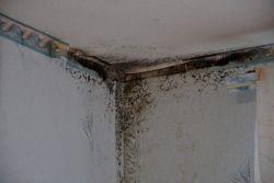как да премахнете влагата в къщата