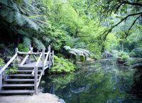 Озеро у подножья Гор Данденонг