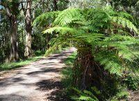Горы Данденонга - пешая тропа