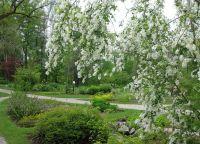 Альпийский ботанический сад