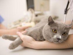 Лечење мачака код куће