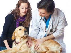 Дијареја са крвљу код паса1