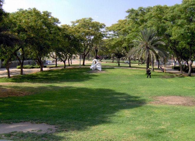 Зеленый город Димона