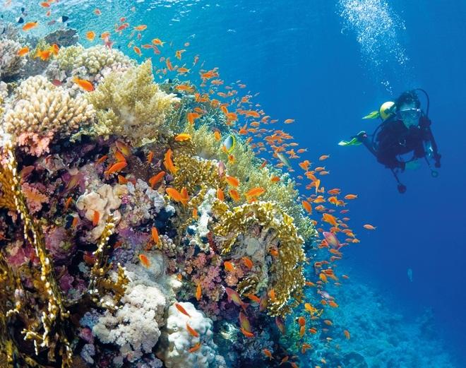 Удивительный подводный мир