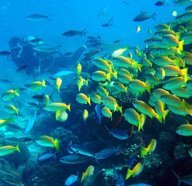 Остров Нуси Бе
