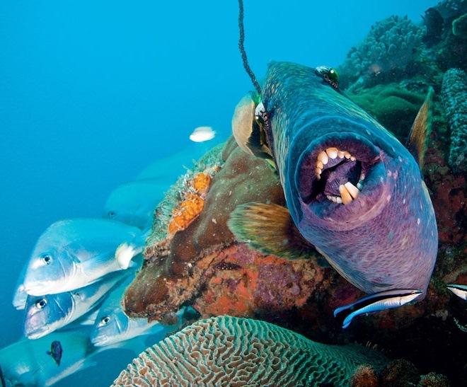 Остров Нуси Таникели. Экзотические рыбы