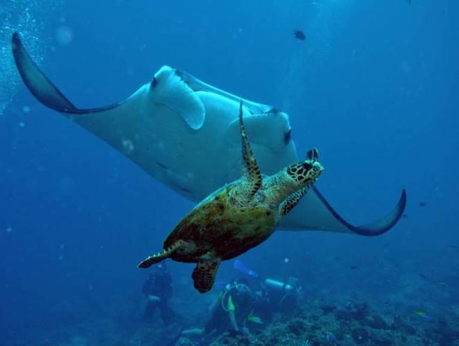 Многообразие морских обитателей
