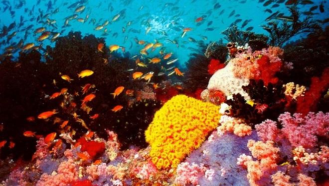 Банановый риф - первый дайвинг-центр на Мальдивах