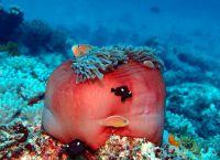 Подводные обитатели архипелага Занзибар