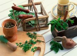 лечение на билки на дванадесетопръстника