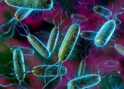 E. coli během těhotenství