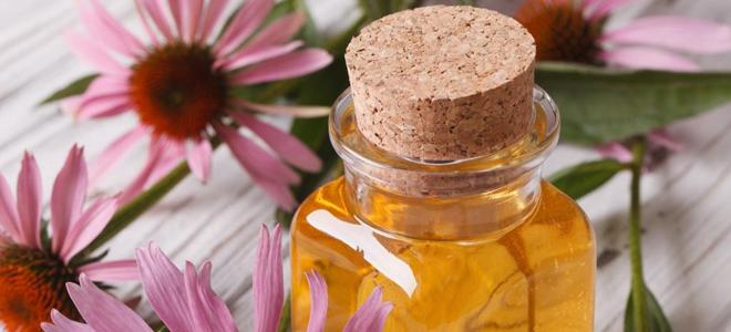 Léčba echinaceou s lidovými léky
