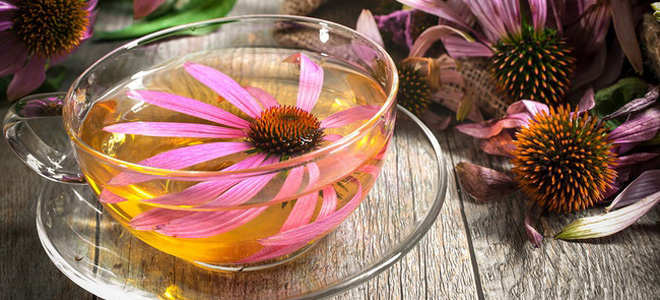 echinacea co to je