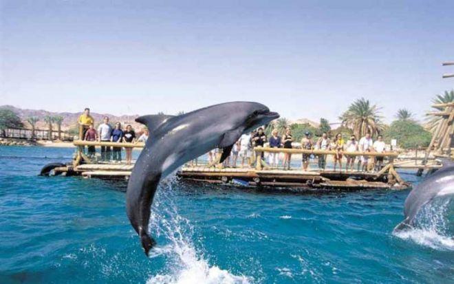 Дельфиний риф