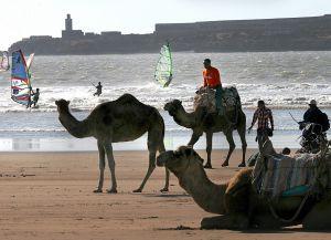 Верблюды на побережье Эс-Сувейры