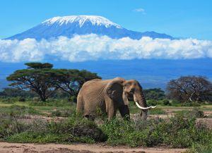 Заповедник Килиманджаро