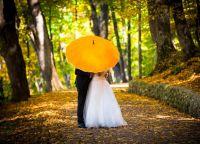 породични кишобран 4