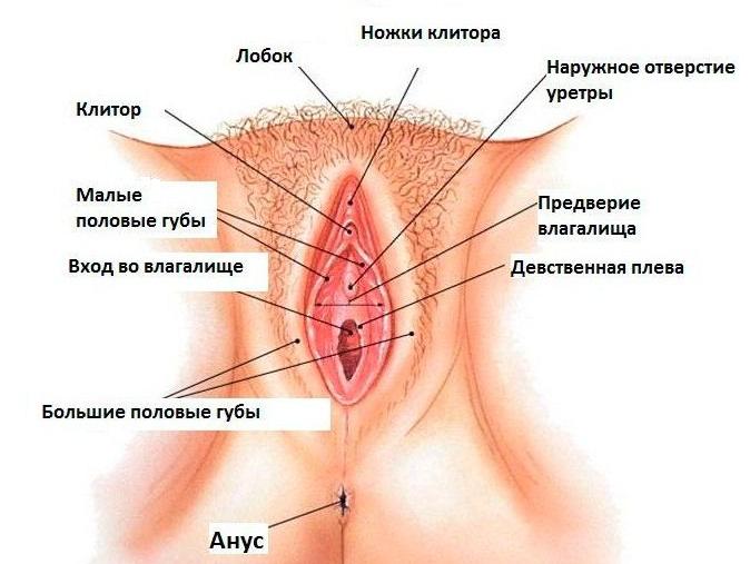 żeński układ rozrodczy 1