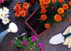 nawóz do kwiatów ogrodowych