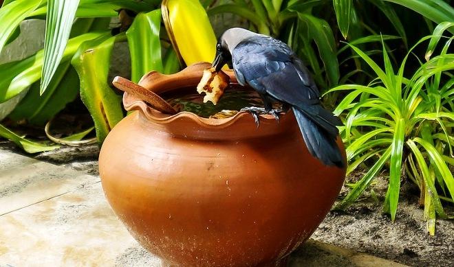 Ворона на острове