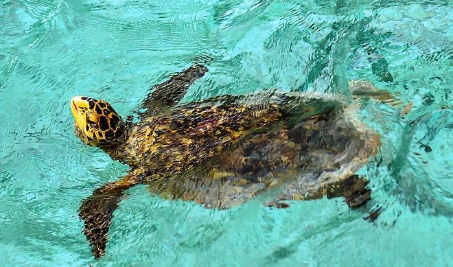 Черепахи на Фихалхохи