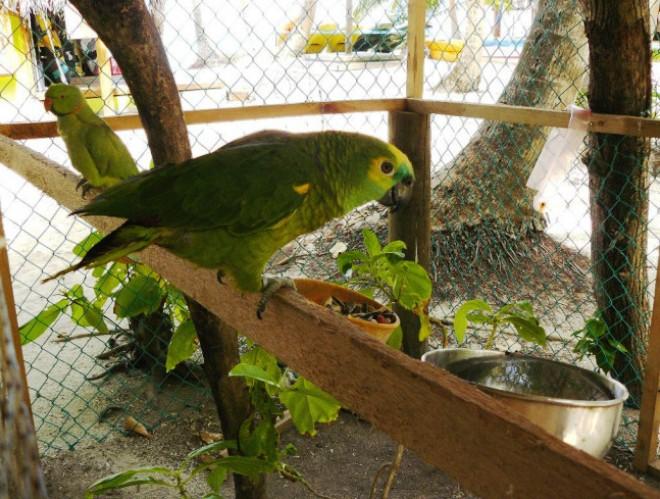 Попугай на Фихалхохи