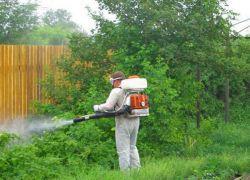 zwalczać komary na stronie