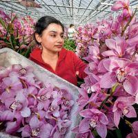 Jak rozvinout květinový obchod