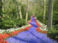 Festiwal kwiatów1