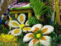 Festiwal kwiatów2