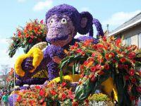 Festiwal kwiatów3
