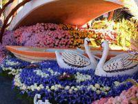 Festiwal kwiatów4