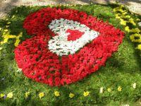 Festiwal kwiatów7