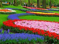 Festiwal kwiatów9