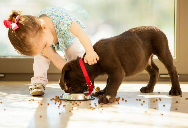 кормим щенка