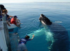 Встреча с китом