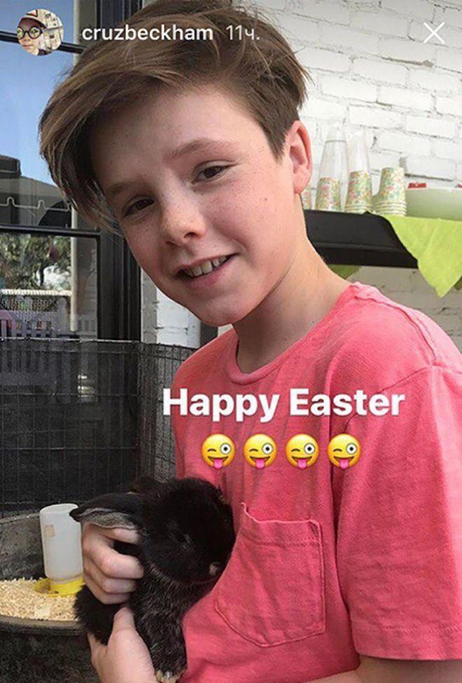 Круз Бекхэм с кроликом